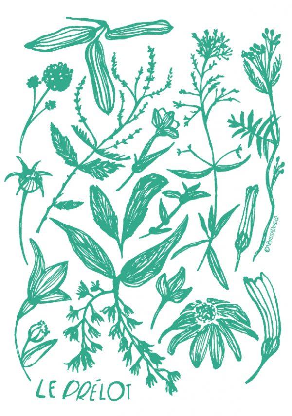 Le Prelot_BotanicalPosterDesign_ByVanessaBinder