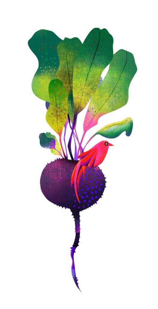 Beetroot-vanessa-binder-illustration